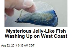 Mysterious Jelly-Like Fish Washing Up Along West Coast