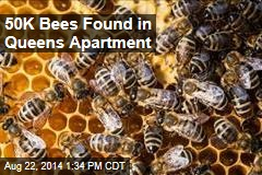 50K Bees Found in Queens Apartment