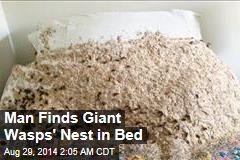 Man Finds Giant Wasps' Nest in Bed