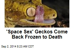 'Space Sex' Geckos Come Back Frozen to Death