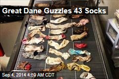 Great Dane Guzzles 43 Socks