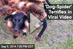 'Dog-Spider' Scares Passersby in Viral Video