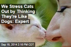 We Stress Cats Out by Thinking They're Like Dogs: Expert