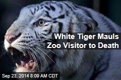 White Tiger Mauls Zoo Visitor to Death