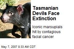 Tasmanian Devils Face Extinction