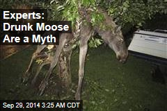 Experts: Drunk Moose Are a Myth