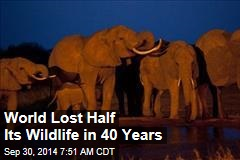 World Lost Half Its Wildlife in 40 Years