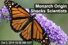 Monarch Origin Shocks Scientists