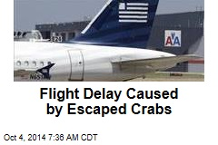 Flight Delay Caused by Escaped Crabs
