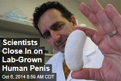 Scientists Close In on Lab-Grown Human Penis