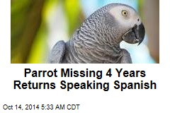 Brit's Missing Parrot Returns Speaking Spanish