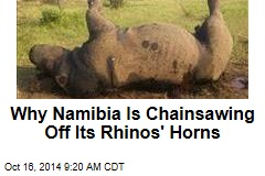 Why Namibia Is Chainsawing Off Its Rhinos' Horns