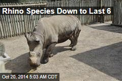 Rhino Species Down to Last 6