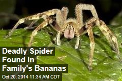 Deadly Spider Found in Family's Bananas