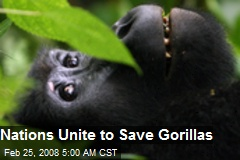 Nations Unite to Save Gorillas