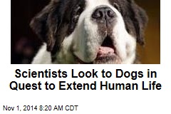 Scientists Look to Dogs in Quest to Extend Human Life