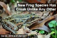 Scientists hit 'jackpot' with new 'cryptic' species of frog