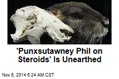 Fossil Find: Giant Rodent With Crazy Super Senses