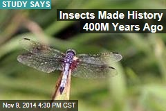 Insects Once Ruled the World