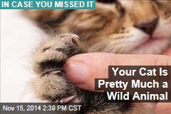 Your Cat Is Pretty Much a Wild Animal