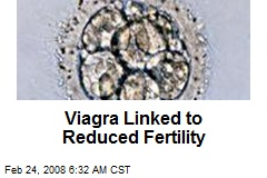 Viagra Linked to Reduced Fertility