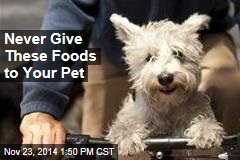Avocados Among 8 Foods Never to Give Your Pet