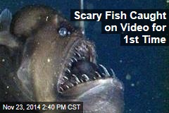 Ugly Fish Caught on Video for 1st Time
