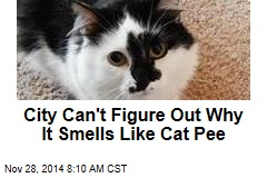 City Can't Figure Out Why It Smells Like Cat Pee