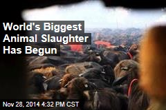 World's Biggest Animal Slaughter Has Begun