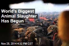 World's Biggest Animal Slaughter Has Begun