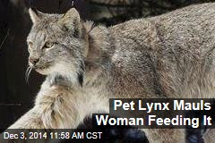 Pet Lynx Mauls Woman Feeding It