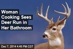 Deer Breaks Into House, Ransacks Bathroom