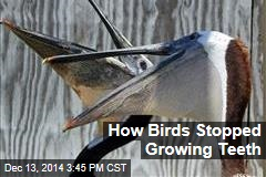 How Birds Stopped Growing Teeth
