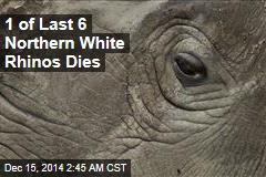 1 of Last 6 Northern White Rhinos Dies