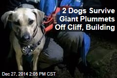 2 Dogs Survive Giant Plummets Off Cliff, Building