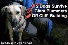 2 Dogs Survive Giant Plummets Off Cliff, Building