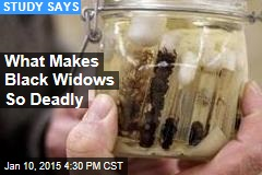 What Makes Black Widows So Deadly