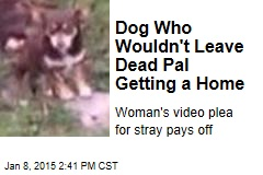 Dog Who Wouldn't Leave Dead Pal Getting a Home