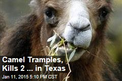 Camel Tramples, Kills 2 in Texas