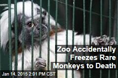 Zoo Accidentally Freezes Rare Monkeys to Death