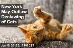 New York May Outlaw Declawing of Cats