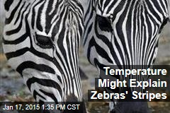 Temperature Might Explain Zebras' Stripes