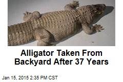 Alligator Taken From Backyard After 37 Years