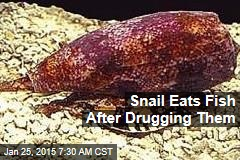 Snail Eats Fish After Drugging Them