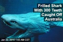 Rare, Scary 'Living Fossil' Shark Caught