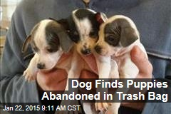 Dog Finds Puppies Abandoned in Trash Bag