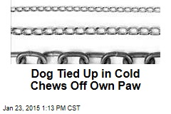 Dog Tied Up in Cold Chews Off Own Paw