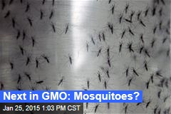 Next in GMO: Mosquitoes?