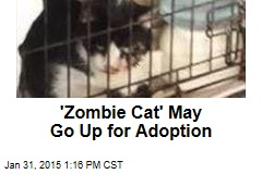 'Zombie Cat' May Go Up for Adoption