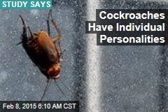 Cockroaches Have Individual Personalities
